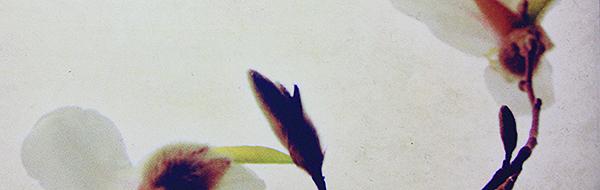 Yoko Ogawa – Der Herr der kleinen Vögel