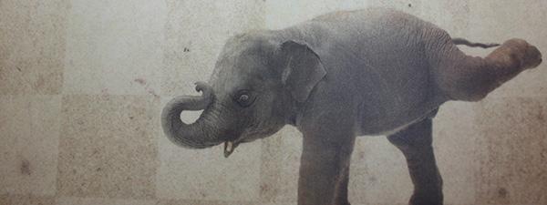 Yoko Ogawa – Schwimmen mit Elefanten